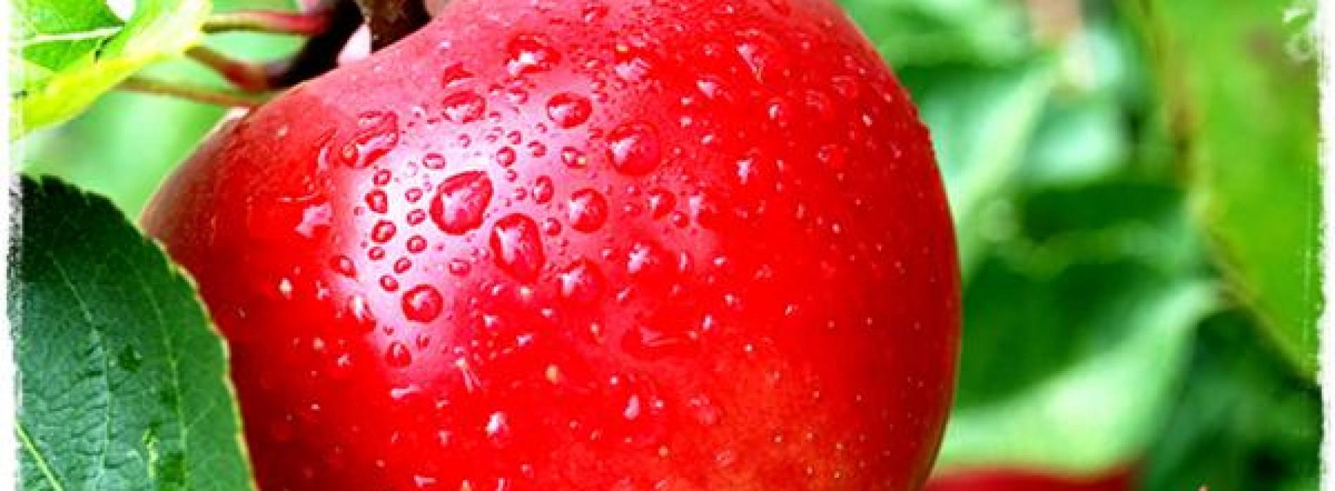 สีของผักผลไม้บ่งบอกถึงอะไร